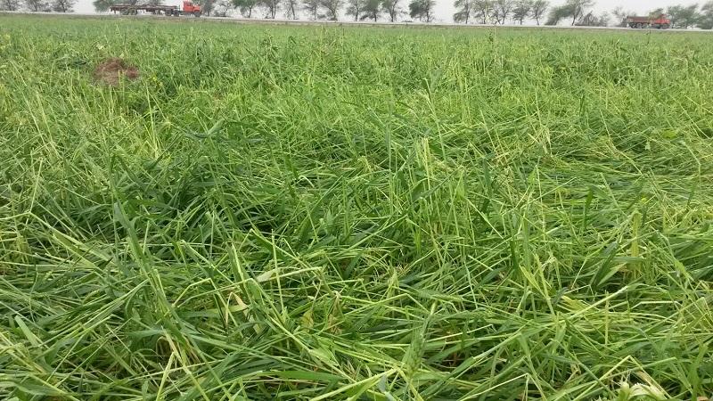بارش شدید تگرگ در چهاردانگه به کشاورزان خسارت سنگین وارد کرد