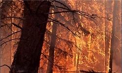 آتشسوزی در جنگل روستای اروت چهاردانگه  مهار شد