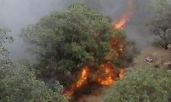 آتشسوزی در ۱۰۰ هکتار از جنگلهای نور/ خاکستر شدن تعدادی از گونههای نایاب جنگلی