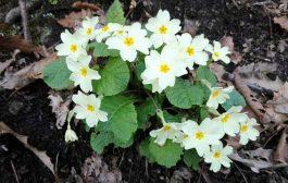 تصاویر: شکوفه های بهاری مهمان طبیعت چهاردانگه
