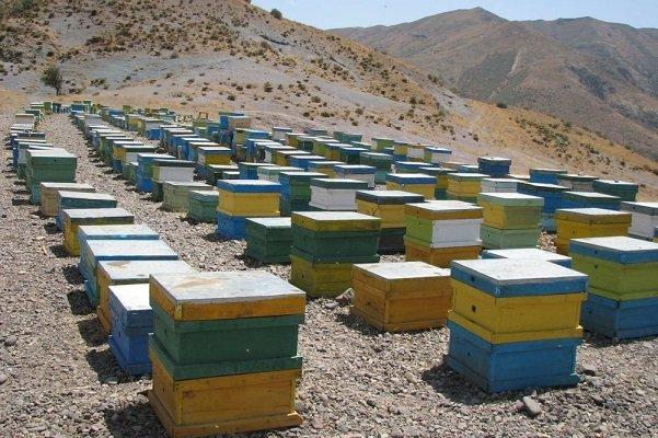 ۴ سارق کندوهای عسل در روستای چاچکام دستگیر شدند