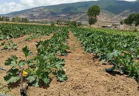 تصاویر: تنوع محصولات کشاورزی بخش چهاردانگه
