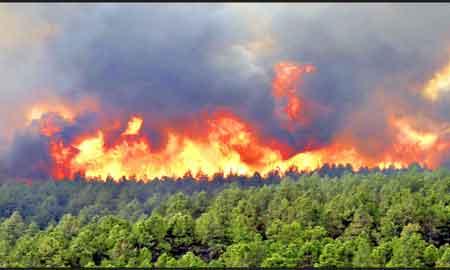 آتش دامن جنگل بخش كليجانرستاق را گرفت