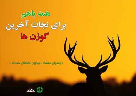 گزارش تصویری فعالیت های داوطلبانه همزمان با فصل گاوبانگی در چهاردانگه