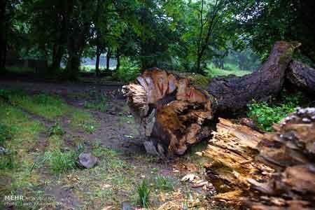 لزوم تصویب طرحی برای خروج درختان افتاده از جنگلها