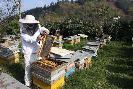 اجرای طرح جانمایی زنبورستان دودانگه