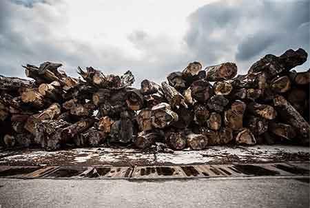 کشف 2 تن چوب جنگلي قاچاق در ساري
