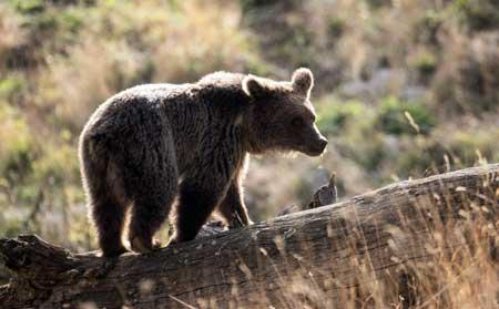 پارک ملی کیاسر منطقه کوهستانی در میان بند و بالابند جنگلهای خزری