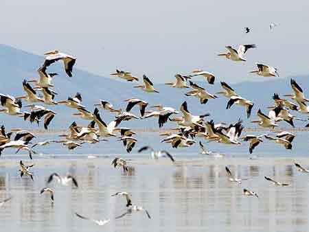 باران پرندگان زمستان گذران را به مازندران کشاند