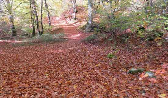 فیلم: زیباییهای جنگل سوادکوه در پاییز