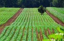 8000 عضو نظام مهندسی کشاورزی مازندران جویای کارند