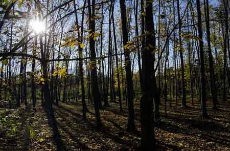 طرح تنفس جنگل در مازندران اجرا شود