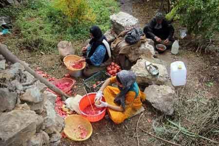 میوه های جنگلی مازندران، ظرفیتی برای درآمدزایی