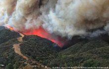 آتش همچنان جنگلهای هیرکانی آمل را می بلعد