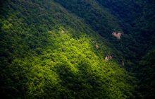 تاکید رئیس مجلس بر اجرای طرح تنفس جنگل در طی دوره سه ساله