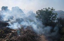 آخرین وضعیت آتشسوزی در جنگلهای آمل