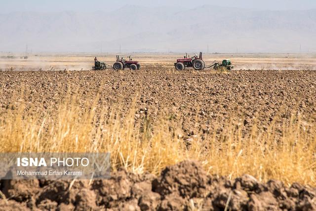 بیش از 30 درصد گندم مازندران در بهشهر تولید میشود