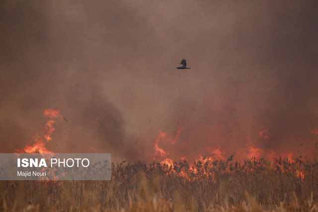 کاهش ماده آلی خاک با سوزاندن بقایای محصولات کشاورزی