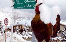 پیشبینی بارش برف در ارتفاعات مازندران/ خزر مواج است