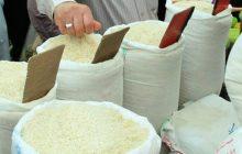 تولید برنج کاملاً ارگانیک مازندران بهزودی