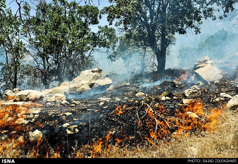 مهار آتش در جنگل خانیکان نوشهر/عامل انسانی، علت حریق