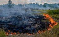 مهار کامل آتشسوزی جنگل در عباسآباد