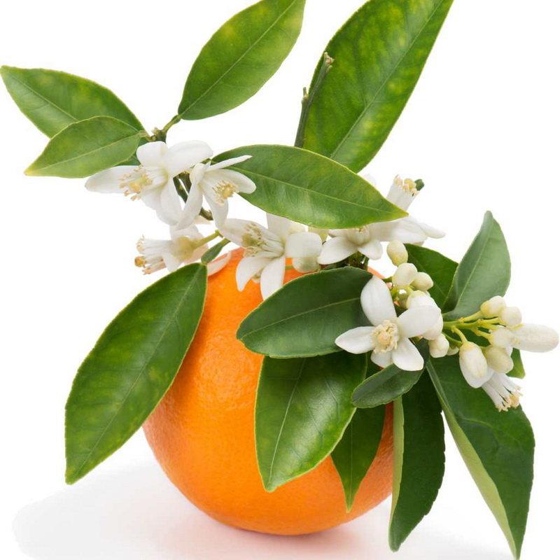 عرق بهار نارنج تقویتکننده مزاج، مغز و قلب