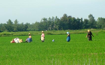 گیر کردن کشاورزی مازندران در تار عنکبوت اقتصاد