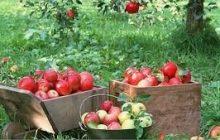 واردات بیرویه محصولات کشاورزی از مهمترین علل تهدیدات امنیت غذایی در کشور