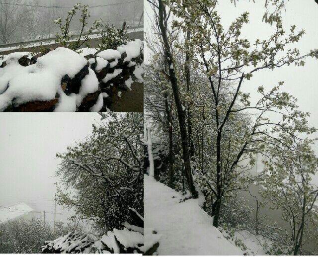غافلگیری نوشهریها از نخستین بارش برف بهاری