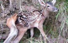 به نوزادان تنهای جانوران وحشی دست نزنید و آنها را از زیستگاه طبیعی جدا نکنید