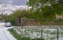 ادامه بارش برف بهاری در بخش چهاردانگه