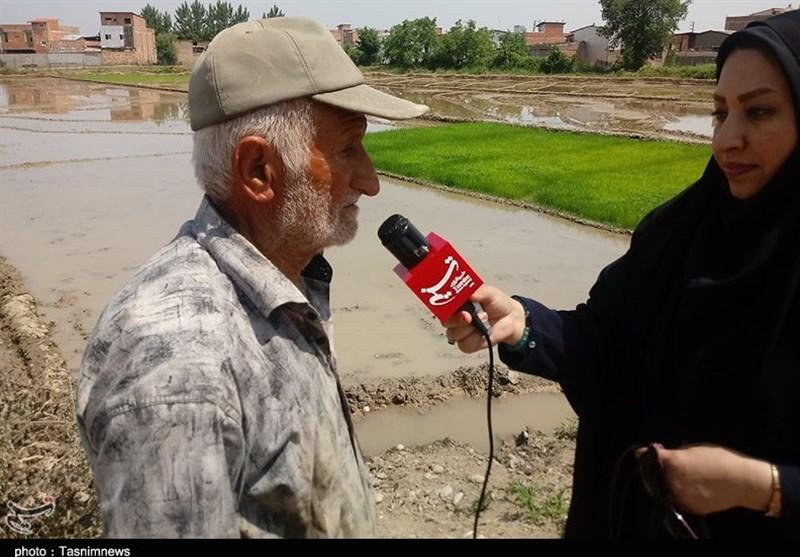 مازندران|کم آبی شالیزارهای مازندران و رنج کشاورزان؛ بیتوجهی مسئولان حوزه آب به تامین منابع+فیلم