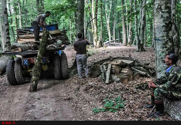 تعلیق کاری یکی از کارگران «قرقبان» تحت مسئولیت نکا چوب در جنگلهای ساری