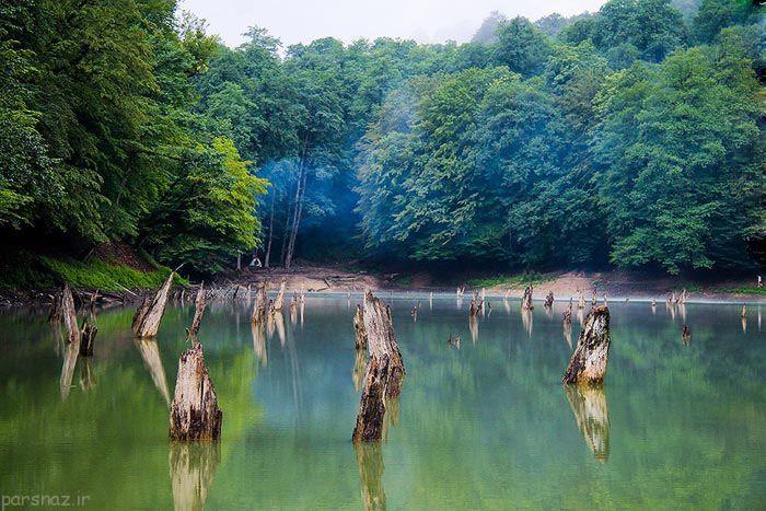 آشنایی با یکی از زیباترین جنگل های مازندران + تصاویر