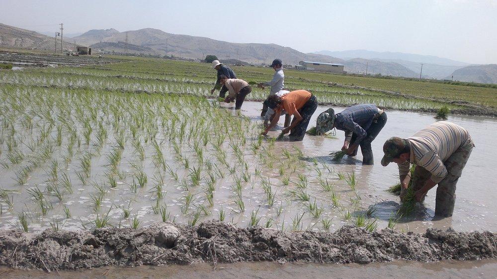 کشاورزان منافع فردی را ترجیح می دهند یا جمعی؟