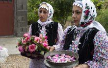 تصاویر: اولین روز جشنواره گل محمدی دودانگه ساری
