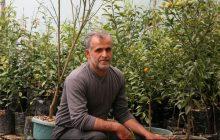 کشاورزی مازندران قربانی کمبود صنایع تبدیلی