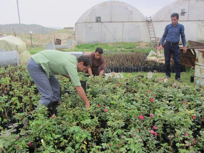 سنگ اندازی در دادن تسهیلات به گلخانهداران مازندران