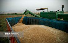 خرید بیش از 34 هزار گندم در مازندران