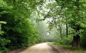 لزوم تقویت محصورسازی جنگلهای مازندران