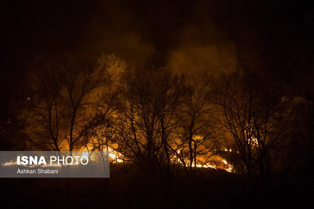 آتش در کمین جنگلهای مازندران/تنش محلی مهمترین عامل آتشسوزی عمدی