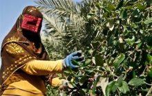صندوق حمایت از توسعه بخش کشاورزی 1500 میلیارد تومان سرمایه دارد