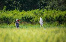 اجرای طرح گردشگری مزرعه و آببندان در استان مازندران