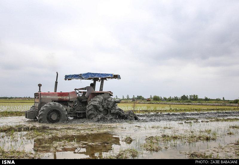 مازندران، گورستان ماشینآلات کشاورزی میشود؟