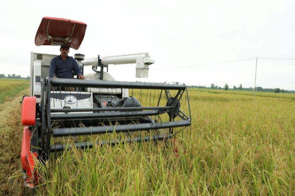 گزارش ایسنا از برداشت نخستین کشت مکانیزه برنج در مازندران
