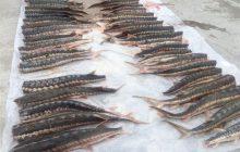 ذخایر ماهیان خاویاری در دریای خزر رو به کاهش است