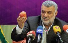 حجتی: هزینه تولید محصولات کشاورزی در ایران بالا است