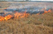 در آتش زدن مزارع کسی جلودارشان نیست!