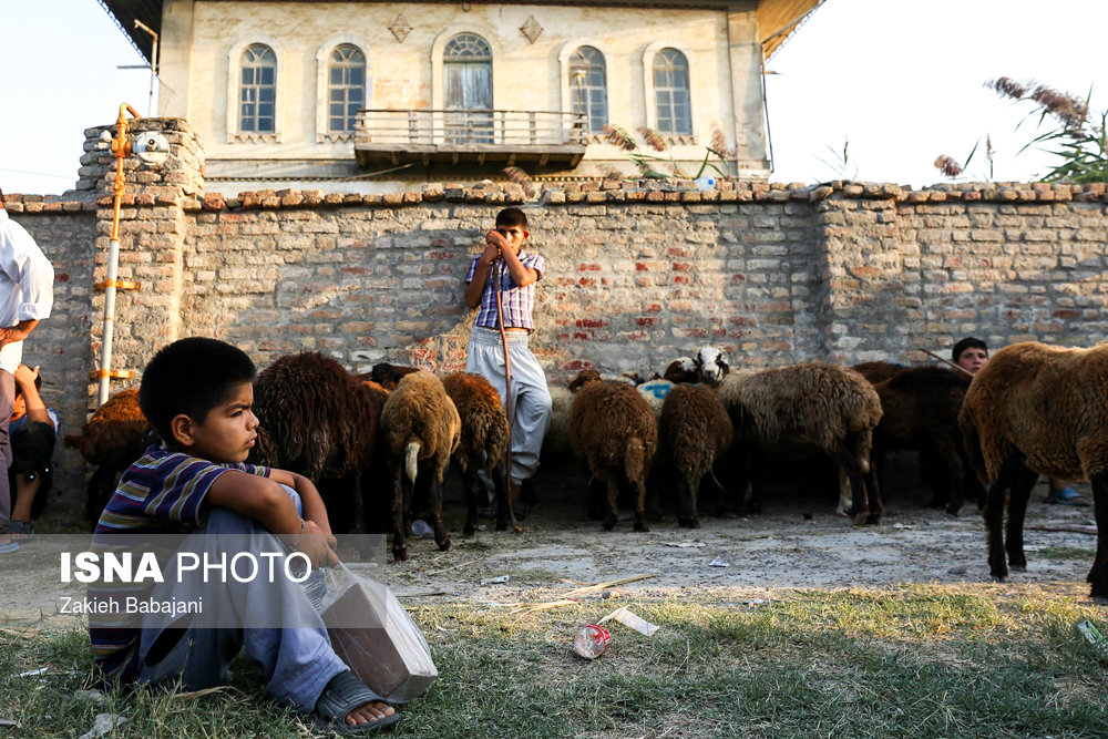 گوشت گوسفند عید قربان در سلاخی قیمتها؟!